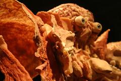 Extreme Close up, Plastinated Face (Patty Mooney) Tags: california sandiego von human anatomy macabre gunther bodyworlds plastination gunthervonhagens humananatomy hagens sandiegonaturalhistorymuseum bodyworldsexhibit germandoctor anatomicalexhibit