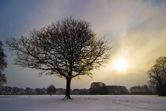 Breakthrough........ (Digital Diary........) Tags: winter snow tree mood freezing atmosphere breakthrough sthelens cliche sherdley sherdleypark