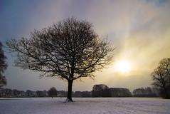 Breakthrough........ (Digital Diary........) Tags: winter snow tree mood freezing atmosphere breakthrough sthelens cliche sherdley sherdleypark