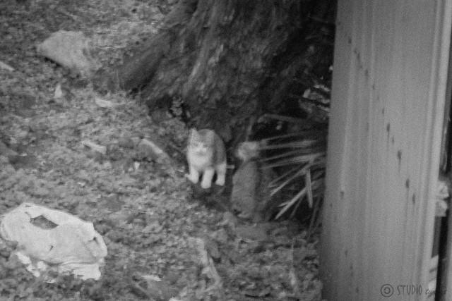 Today's Cat@2013-02-05