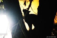 gato (jose_tiznado.tapia) Tags: gato sombra resplandor chile santiago mapocho noche