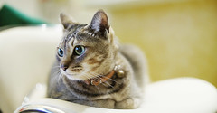 Bill the girl (Steve only) Tags: sony nex3 porst color reflex auto 55mm f14 5514 m42 mitakon lensturbo cats bill 11455mm