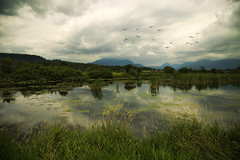 Born on the Bayou (charhedman) Tags: mountains water grass birds clouds reflections moody coquitlam marsh marshland colonyfarms