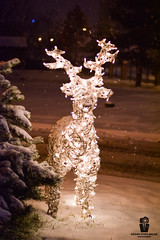 M e e t   R u d o l p h (Rzvan Oprea-Balai) Tags: winter night outside lights path creative snow garden snowing memories holiday illuminated decoration tranquil celebration fir snowfall warmlight globes reindeer christmas bucharest december romania