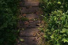 Lilliput Highway (Netsrak) Tags: gras grass leaf leaves blatt bltter wood holz path way weg