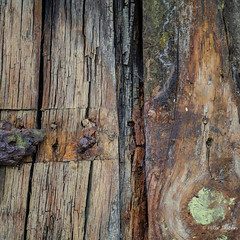 Life isn't about waiting for the storm to pass...It's about learning to dance in the rain (Peter Jaspers) Tags: frompeterj 2016 olympus zuiko omd em10 1240mm28 texel wadden waddeneiland museum juttersmuseum wood texture wrak shipwreck detail history kaapskil voc redevantexel htt texturaltuesday 500x500 square
