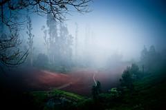 mystic land (Ashwin ravishankar) Tags: ooty incredible india canon600d landscape surreal