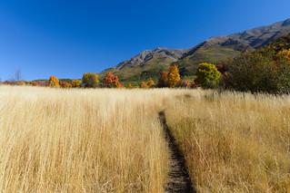 The trail through the tall grass