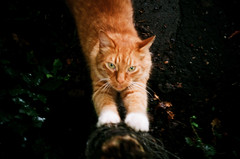 LC-A (Daniel Cane) Tags: pet cats pets colour tree film animal animals rural cat 35mm hair fur countryside ginger nationalpark paw lomo lca feline westsussex 200iso iso negative claw 35mmfilm 200 vista plus analogue paws scratch southdowns claws scratching gingercat colournegative c41 agfaphoto lomokompaktautomat southdownsnationalpark agfaphotovistaplus workandcommute worklongfurgingercat