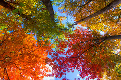 Fall Up (benchorizo) Tags: autumn chicago fall colors nikon fallcolors chicagoist banias d7000 benchorizo