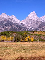 Grand Tetons Day 4 (21a) (moelynphotos) Tags: mountains yellow landscape wyoming grandtetons moelynphotos dirtcheapphototour