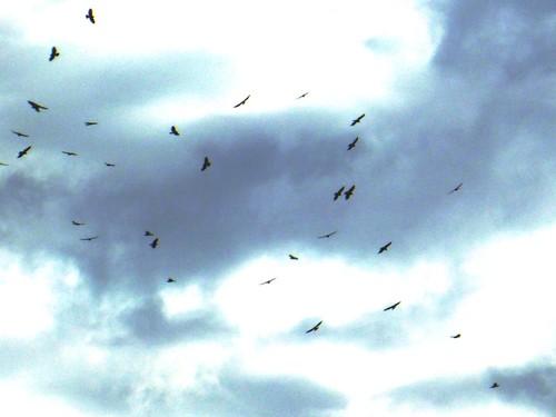 Taller de Migración de Gavilanes 2012-Earth y CIENTEC