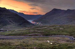 Sunset with sheep (Fil.ippo) Tags: seyðisfjörður iceland island islanda sunset tramonto sheep travel nikon filippo filippobianchi landscape paesaggio pecore d5000