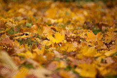 Bltter (bine77) Tags: fall nature laub herbst natur bltter