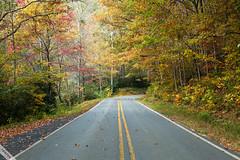 Autumn Road (Ton Ten) Tags: road park autumn nature colors landscape falls tonten zf2 distagont1450