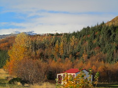 Iceland - Hvolsvollur - Skogasafn Folk Museum - Outdoor Exhibits surrounded by Autumn Coloured Forest (JulesFoto) Tags: museum iceland autumncolours folkmuseum skogar skogasafn hvolsvollur