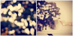 {bokeh wednesday} ({ogio}) Tags: camera city flowers blue autumn blackandwhite bw blur flower color green fall colors grass leaves closeup canon fence garden geotagged happy eos leaf colorful dof bright bokeh explore hyderabad cishore kishore bw2 hbw bokehlicious flickrgolfclub bokehwednesday happybokehwednesday hbwe