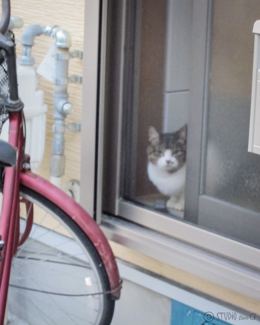 Today's Cat@2012-10-24
