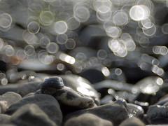 Muschelsuche am Rhein (Jrgenshaus) Tags: autumn geotagged wasser bonn bokeh herbst steine nrw rhein ferien rheinland muscheln ruleofthird manuellerfokus meyergrlitztrioplan100mm128