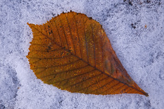 Holding each other in our heart while letting go of what's gone (Poupetta) Tags: leaf teachers firstsnow autumnal connection lettinggo youi suchaslife reflectionsaboutlife helsinkihelsingforsfinland thepeoplewemeetinlife