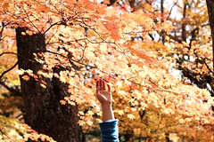 I'm a little bit lonely these days. (signe constable.) Tags: vacation selfportrait fall japan sadness hand 50mm14 autumnleaves rushmore jumper nikko bluesweater bokah nikkonationalpark changingcolours signeconstablephotography