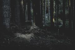 _ (www.dmeene.de) Tags: trees white black tree forest germany dark hamburg shed hut harburg