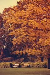 Good-bye autumn (Babreka) Tags: autumn fall nature hungary herbst natur természet amateur amatuer magyarország gödöllő ősz amatőr