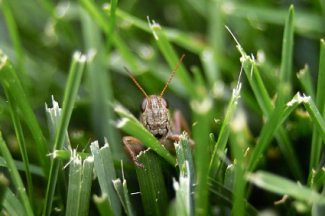 Natural Methods to Control Lawn and Garden Pests