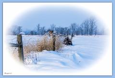 untitled-02723-2.jpg (bonnie5378) Tags: winter friends snow fence ngc birdhouse grasses photomix hff flickrenvy ilovemypics photosofqualitytosmileabout naturewithallitswonders jan2013 bestevergolden