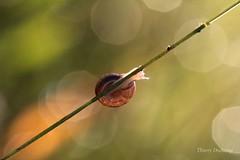 L'quilibriste (photosenvrac) Tags: light macro lumire shell snail flare escargot coquille thierryduchamp