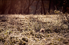 (Enny Napolitano) Tags: winter mountains cold ice grass montagne erba inverno freddo ghiaccio
