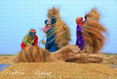 Rice Threshing (Nadeem Khawar.) Tags: pakistan women rice paddy fields dailylife punjab womenatwork pakistaniphotographer landscapephotographer nadeemkhawar gettyimagesmiddleeast