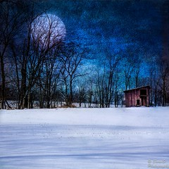 Winter's Moon (DaraDPhotography) Tags: trees winter moon snow nature field rural scenery textures textured awardtree tatot daarklands magicunicornverybest magicunicornmasterpiece sailsevenseas lenabemannatextures wwwdaradphotographycom pixeldustphotoart imageexcellence bestevercompetitiongroup backgroundmoon pdpabluemeaway pdpacloudpaint