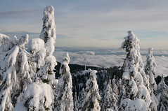 Grouse Mountain Snowshoeing