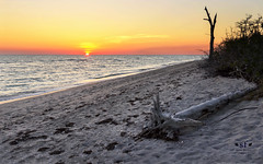 Sunset at Stump Pass Beach (SteveFrazierPhotography.com) Tags: stumppassbeach statepark sunset sand footprints shoreline shore gulfofmexico gulfcoast coastline coast log deadtrees invasivespecies may 2016 stevefrazierphotography canoneos60d waves water color beautiful scene scenery waterscape landscape brush shells seashells evening sun horizon clouds nature