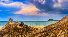 Log Island (ceratof1) Tags: log island beach water ocean wood tree sand clouds sky santa clara playa panama isla tronco arbol arena nubes cielo canon eos rebel t3i