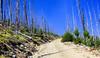 The Magruder Corridor Road (jimgspokane) Tags: themagrudercorridor mountains mountainroads forests idahostate montanastate camping naturewatcher otw