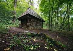 (andrei030) Tags: casa cabaa woods wood cabin forest cabininforest trees bosque moss musgo green verde romania sibiu transilvania