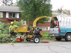 16Sep26 155 (diffuse) Tags: arborist cutting logging treeremoval backyard chipper chipping branches leaves berries