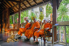 Three Buddhist Monks at Doi Suthep (Anoop Negi) Tags: doi suthep wat phra that chiangmai thailand monks buddhist theravada sitting relaxing dog photo anoop negi men travel photography ezee123