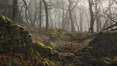 Moss Side (Russ Barnes Photography) Tags: