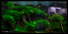 Green Aqua Showroom (viktorlantos) Tags: aquascaping aquascape adahungary aquariumplants aquarium aquascapingshopbudapest aquadesignamano plantedaquarium plantedtank plantedaquariumgallery greenaquagallery greenaquahungary nvnyesakvrium berendezs underwaterworld