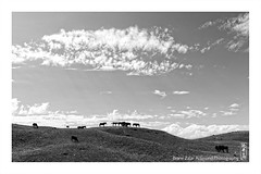 Horses (alamond) Tags: wilderness wild horse horses sky clouds landscape kyrgyzstan canon 7d markii mkii llens ef 1740 f4 l usm alamond brane zalar