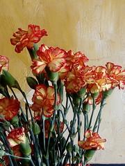 (doloreslopez2) Tags: ramo naranjas clavelinas
