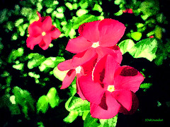 Red Vinca (Stephenie DeKouadio) Tags: canon outdoor art artistic flower flowers abstract abstractart macro vinca color colour colorful darkandlight green painting red