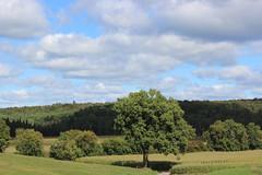 Landscape in West Brome (pegase1972) Tags: landscape qc qubec tree arbres quebec canada estrie easterntownships westbrome licensed shutter fotolia
