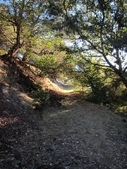 On the trail (comma?) Tags: autumn californiahills morninghike californiaautumn californiamountains mountainhiking