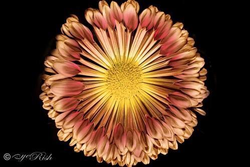 eyeRish-Flower-Painting-03-