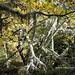 Fotos bosque Muniellos