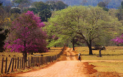 The Human Element (osvaldoeaf) Tags: road pink flowers trees brazil green nature brasil rural fence landscape spring purple farm cerrado goinia gois panoramafotogrfico peopleenjoyingnature natureandpeopleinnature onlythebestofflickr